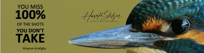 Wildtierfotografie von Harald Stelzer